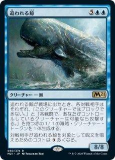 追われる鯨/Pursued Whale