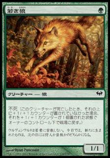 若き狼/Young Wolf