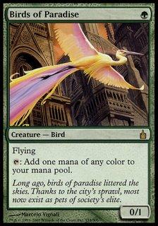 極楽鳥/Birds of Paradise