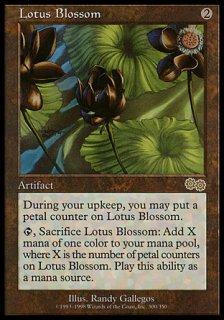水蓮の花/Lotus Blossom