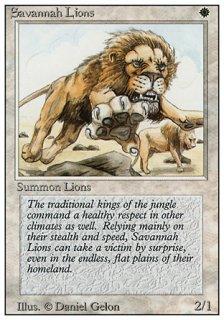 サバンナ・ライオン/Savannah Lions