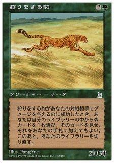 狩りをする豹/Hunting Cheetah