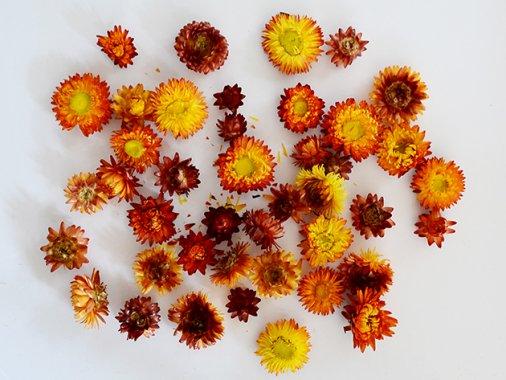 ドライ・オレンジ ヘリクリサム(ムギワラギク)フラワーヘッド 30g 花径 約3-5cm