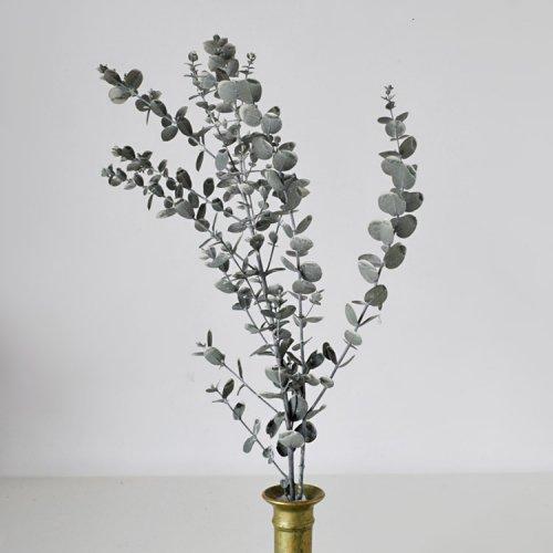 グニーユーカリ プリザーブド-ウォッシュホワイト約40cm