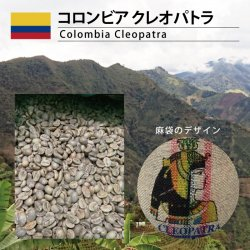 コロンビア クレオパトラ(Colombia Cleopatra)