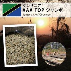 【復活!!】タンザニア AAA TOP ジャンボ(Tanzania AAA TOP Jumbo )