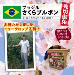 《新豆入荷!!》ブラジル さくらブルボン(Brazil SAKURA Bourbon )