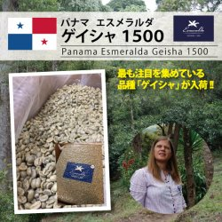 <img class='new_mark_img1' src='https://img.shop-pro.jp/img/new/icons55.gif' style='border:none;display:inline;margin:0px;padding:0px;width:auto;' />[新豆入荷]パナマ エスメラルダ農園 ゲイシャ 1500(Panama Esmeralda Geisha 1500)(500g〜)