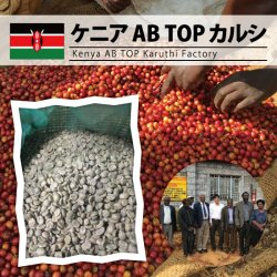 【残りわずか】ケニア AB TOP カルシ(Kenya AB TOP Karuthi Factory)