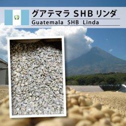 グアテマラ SHB リンダ(Guatemala SHB Linda )