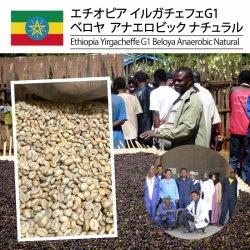 <img class='new_mark_img1' src='https://img.shop-pro.jp/img/new/icons14.gif' style='border:none;display:inline;margin:0px;padding:0px;width:auto;' />エチオピア イルガチャフィG1 ベロヤ アナエロビック ナチュラル( Ethiopia Yirgacheffe G1 Beloya Anaerobic Natural )