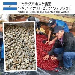 ニカラグア ボスケ農園 ジャワ アナエロビック ウォッシュド(Nicaragua Finca El Bosque Java Anaerobic  Washed)