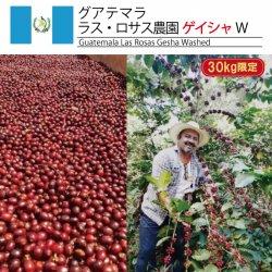 <img class='new_mark_img1' src='https://img.shop-pro.jp/img/new/icons14.gif' style='border:none;display:inline;margin:0px;padding:0px;width:auto;' />[30kg限定] グアテマラ ラス・ロサス農園 ゲイシャ W(Guatemala Las Rosas Gesha Washed)(500g〜)
