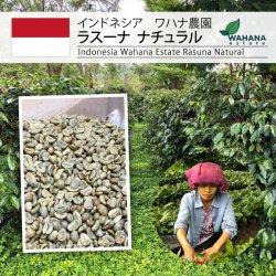 <img class='new_mark_img1' src='https://img.shop-pro.jp/img/new/icons14.gif' style='border:none;display:inline;margin:0px;padding:0px;width:auto;' />インドネシア ワハナ農園 ラスーナ ナチュラル(Indonesia Wahana estate Rasuna Natural)