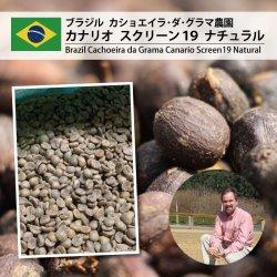 ブラジル カショエイラ・ダ・グラマ農園 カナリオ S19 N(Brazil Cachoeira da Grama Canario S19 Natural)