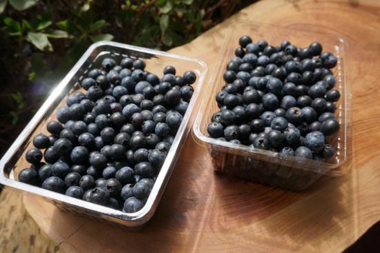 ブルーベリー(生食用)<br>1kg<br>