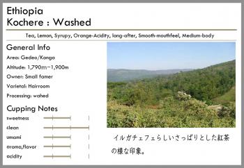 エチオピア -washed-<br>浅煎り<br>イルガチェフェG1(100g)<br> <br>フローラル・ティ<br> <br>エチオピアらしい品質