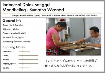 インドネシア -washed-<br> 深煎り<br>ドロッサングール(100g)<br> <br>スパイス・マンゴー・クリンカップ<br> <br>とても綺麗なマンデリン