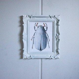 LILJEBERGS 博物写真【甲虫】