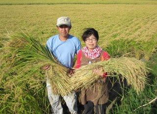 姉が作った埼玉産こしひかり玄米重量30kg