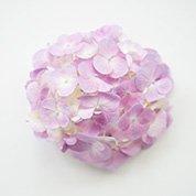 紫陽花(ピンク)  あじさい 20花以上
