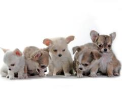 〔超小型犬〕SSサイズ