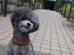 小型犬におすすめの首輪