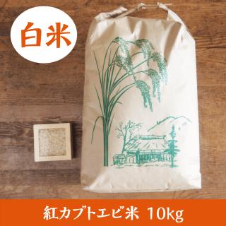 紅カブトエビ米 10kg(白米)