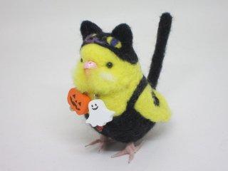新作 ハロウィン限定 黒猫着ぐるみセキセイインコ ルチノ 赤目変更可 鳥 ゆこりん工房