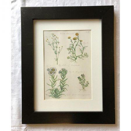 ボタニカルアートフレーム 植物画