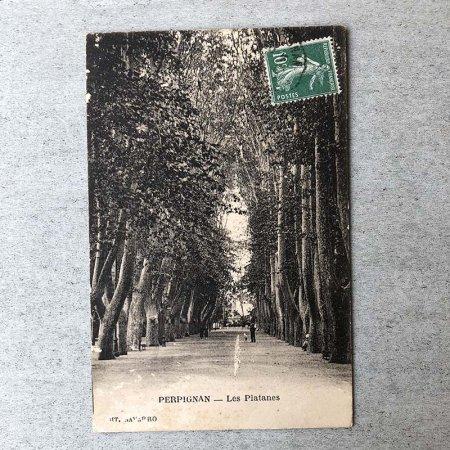 ポストカード プラタナスの並木(USED)1915年頃