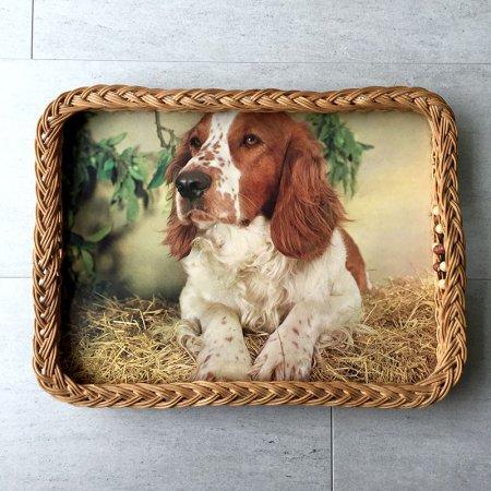蔓カゴ コッカースパニエル犬のトレー