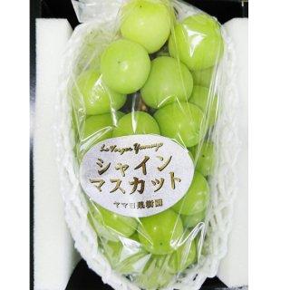 【新潟のお土産 通販】 ヤマヨ果樹園 シャインマスカット 2房 常温発送