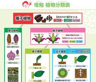 植物分類表ミニポスター