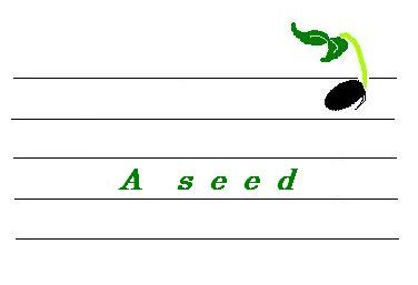 a-seed-mall