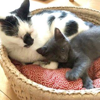 猫ざぶとん(中・大)どろぼう猫 3種