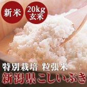 【令和2年度】EM農法 新潟県こしいぶき 粒張り米<20kg玄米>一度食べたら、病み付き米[送料別]