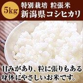 【令和2年度】特別栽培 粒張米<減農薬、減化学肥料>新潟県コシヒカリ[送料別]