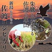 【令和2年産】◆特別栽培米◆佐渡コシヒカリ<農薬・化学肥料5割減>新潟県[送料別]