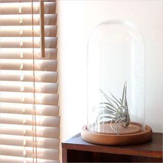 Glass Dome グラスドーム M