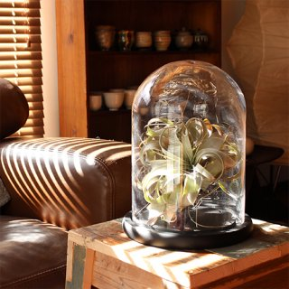 Glass Dome グラスドーム L