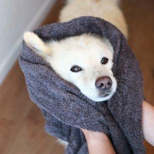 うちのこタオル