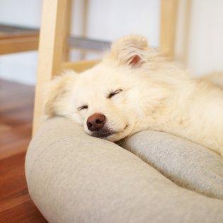 オーガニックコットン犬用ベッドM