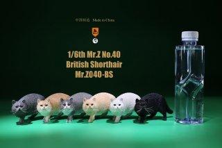 送料無料 1/6 MR.Z MRZ040-BS  イングランド ブリティッシュショートヘア
