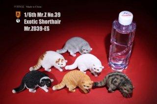 送料無料 1/6 MR.Z MRZ039-ES  ブリティッシュショートヘア猫