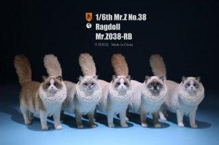 送料無料 1/6 MR.Z MRZ038-RB  ラグドール猫