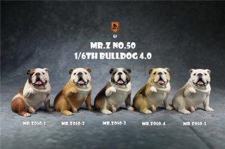 送料無料 予約 1/6 MR.Z NO.50 MR.Z050 ブルドッグ犬 4.0版