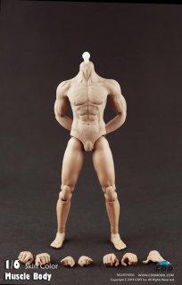 送料無料 1/6 COOMODEL COO B34006 Muscle male Body  2021最新版 男性素体ボデイ