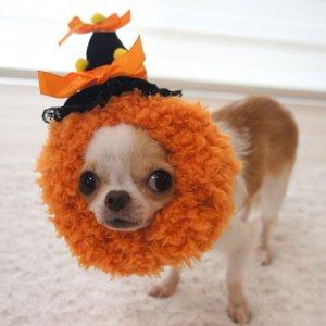 ハロウィンスヌード☆かぼちゃ★犬用スヌード★犬用パーティーグッズ【ドッグウェアならene】