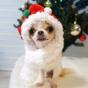 赤ずきんサンタ帽★犬用被り物★犬用帽子【ドッグウェアならene☆】